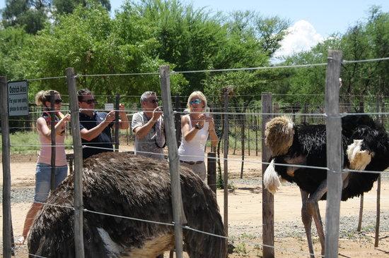 Safari Ostrich Show Farm: lots of opportunities to take photos #Safari Ostrich Farm