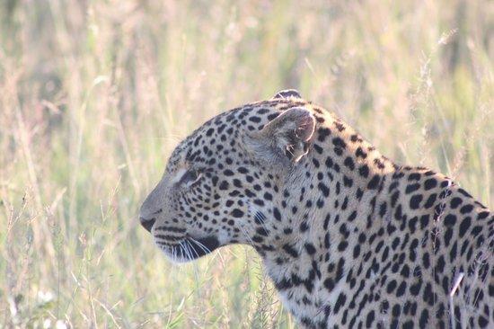 Nkorho Bush Lodge : leopard