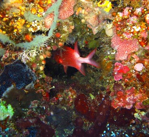Bunaken Cha Cha Nature Resort: Underwater