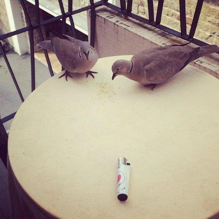 Hotel Principe: Tortore molto discrete che ti fanno compagnia sul balcone.