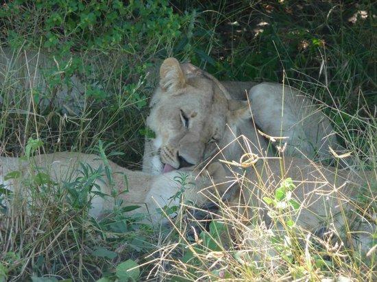 Sango Safari Camp : Sisterly love