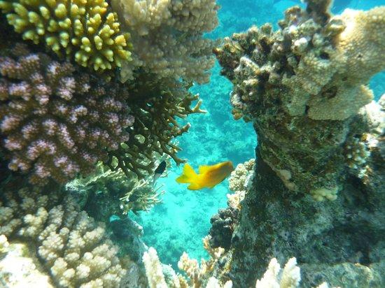 Hilton Sharks Bay Resort : Подводный мир отеля