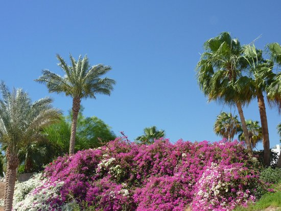Domina Hotel & Resort Harem: Оазис
