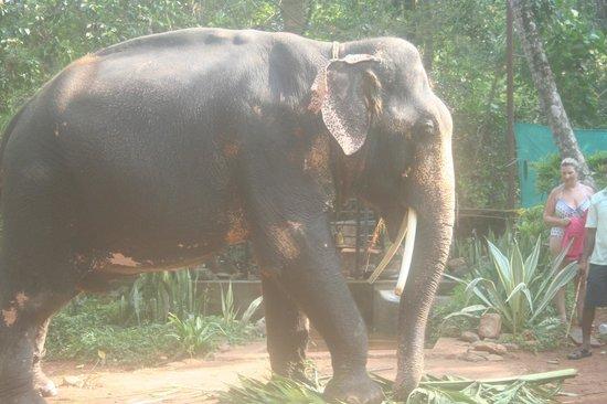 Colonia Santa Maria (CSM) : Elephant in street