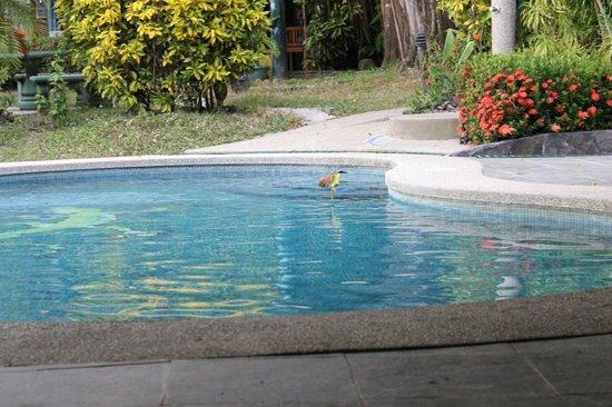 Costa Paraiso: Tropical birds at pool
