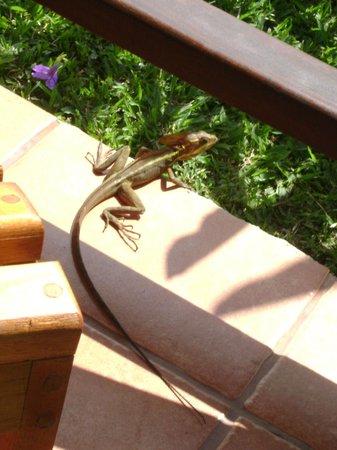 Hotel Arenal Montechiari: Geko sul porticato del bungalow