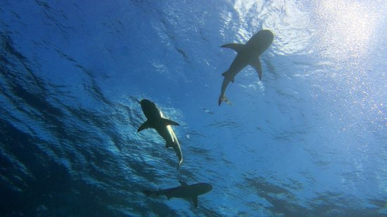 Manta Ray Bay Resort: Vertigo
