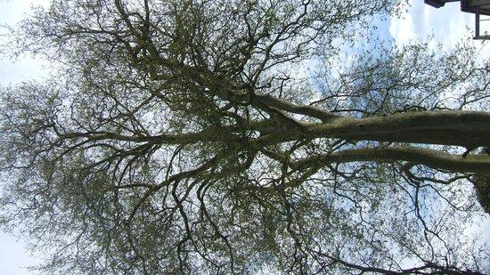 Les Jardins de Mazamet: Un platane bicentenaire dans le jardin