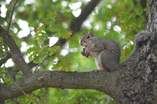 Alexandra Park: Squirrel