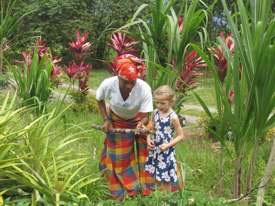 OhLaLa Villas : My little girl picking sugar cane from Debra's garden