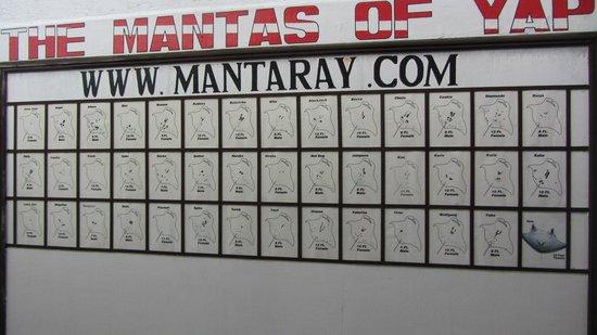 Manta Ray Bay Resort: Manta Board