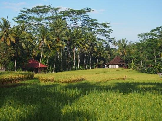 Chapung SeBali Resort and Spa: Some of the scenery on the road nearby.
