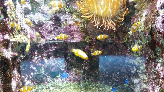 Aquarium La Rochelle : à contempler