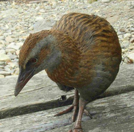 Kapiti Island Nature Tours
