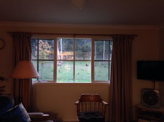 Gracefield Cottage : You can see the animals right outside our window