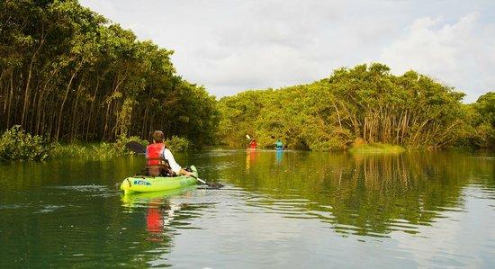 Finca Exotica Ecolodge: Kayaking near Carate