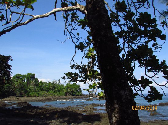 Casa Corcovado Jungle Lodge: panorama della spiaggia
