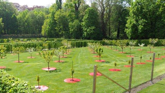 Parc de Sanssouci : ciliegeto parco sanssouci