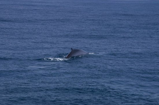 Hornblower Cruises & Events: Fin Whale