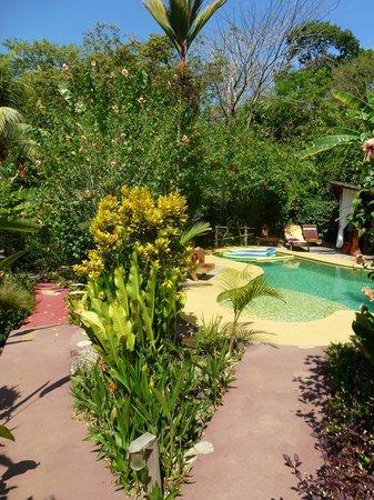 Phidjie Lodge : La piscine qui donne envie de lézarder toute la journée