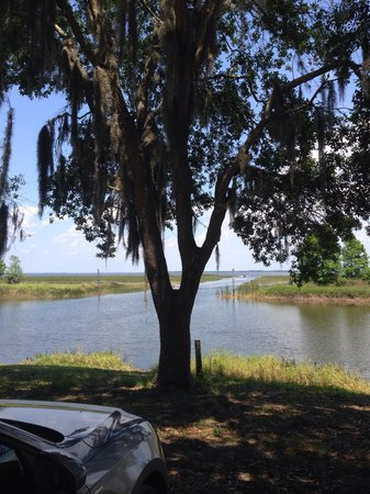Boggy Creek Airboat Rides: View of the lake