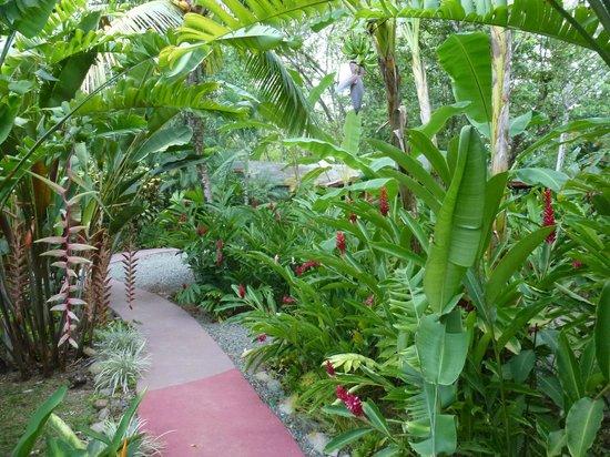 Phidjie Lodge : un aperçu du magnifique jardin tropical