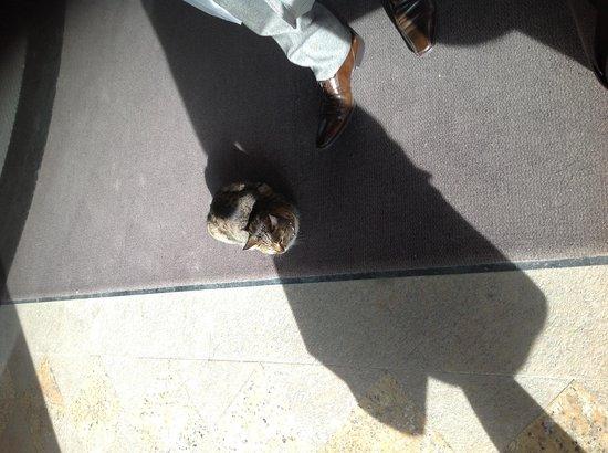 Swissotel Ankara : こちらがくだんの猫です