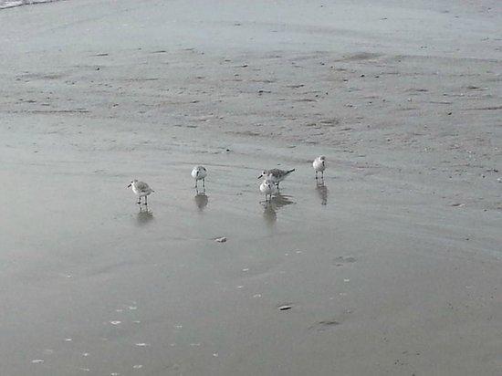 Comp Cove Oceanfront Resort Seagulls