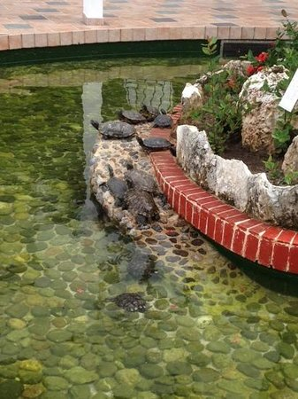 The Royal Cancun All Suites Resort: the turtle pond