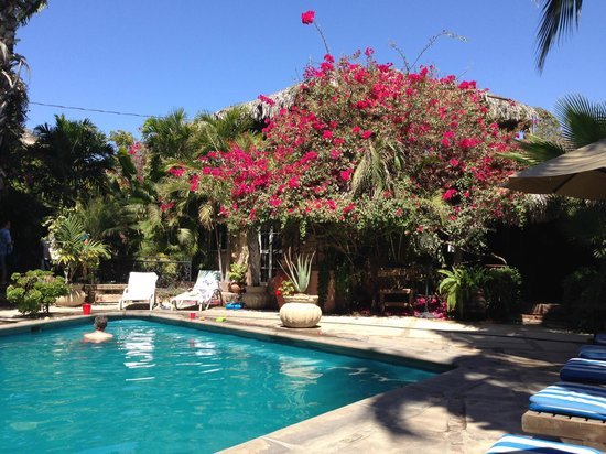The Bungalows Hotel: Perfect pool and gorgeous yard