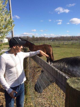 Inn at Laurita Winery: Mark feeding the horses