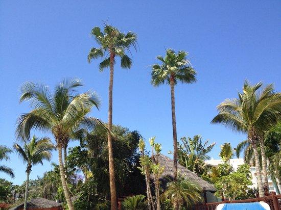 Maspalomas Princess Hotel: Desde las hamacas de la piscina entre palmeras.