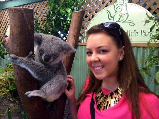 Sydney Great Escapes - Blue Mountains Day Tours: Meeting the Koalas at the Featherdale Wildlife Park