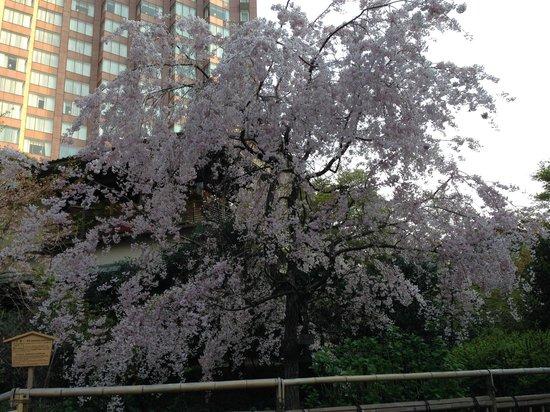 Hotel Chinzanso Tokyo: 庭園