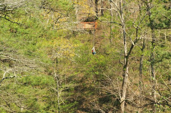 Historic Banning Mills Zip Line Canopy Tours: A guide coming in on ther Swoop zip line