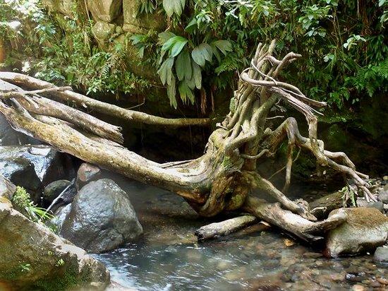Vert-Intense : Canyon (3)