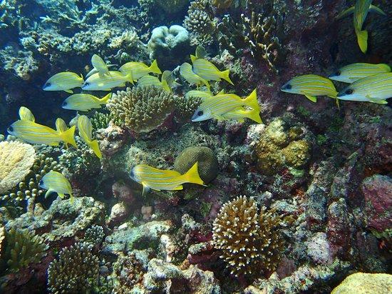 Makunudu Island : Le monde sous-marin