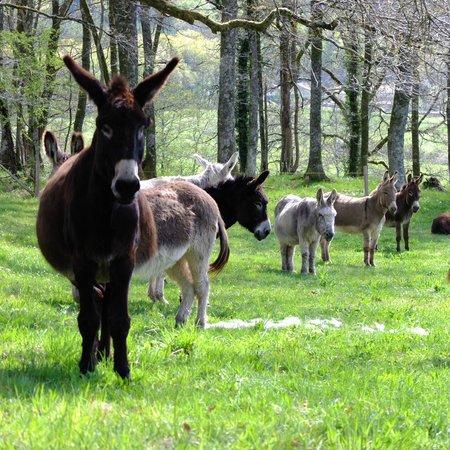Les Anes de Vassiviere: Donkeys