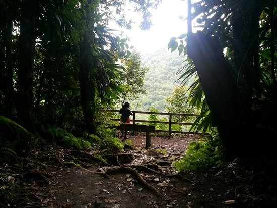 Emerald Pool Nature Trail: Rainforest viewing point