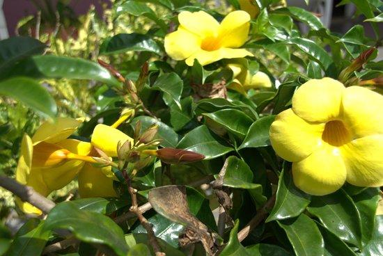 Villa Nereyda: Front garden flowers.
