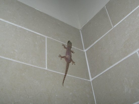 The Paradise Resort and Spa: Resident gecko