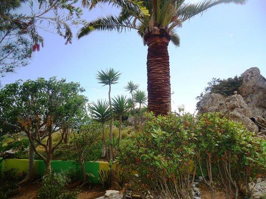 Aris Hotel: garden
