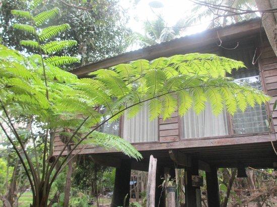 Fern Paradise: bungalow
