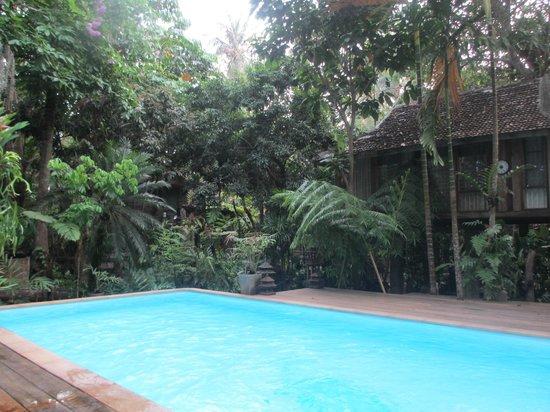 Fern Paradise: piscine