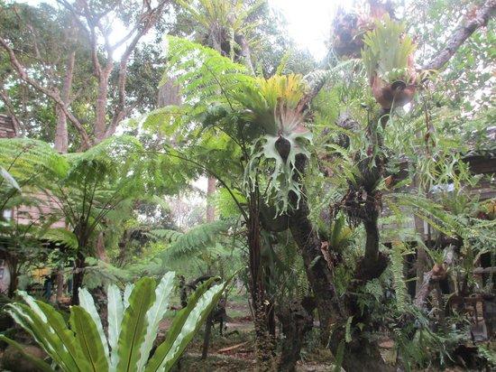 Fern Paradise: jardin