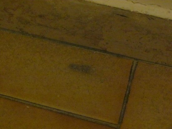 Auto Park Hotel: grumi di polveri