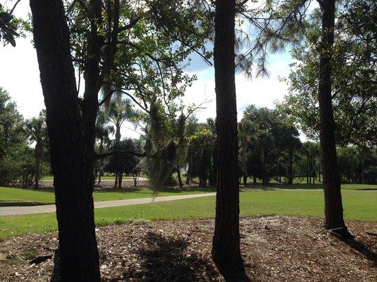 Marriott's Sabal Palms : Gold course