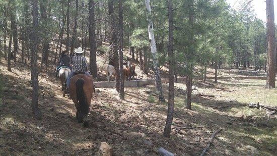 High Mountain Trail Rides: The trail ride