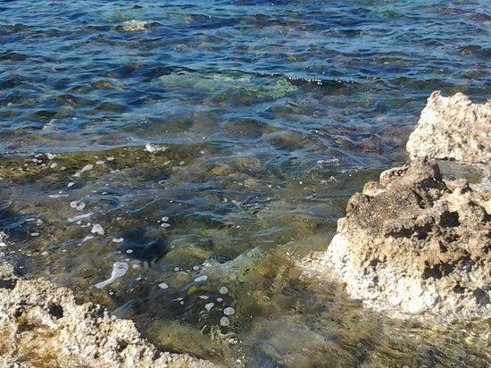 Kissos Hotel : Море