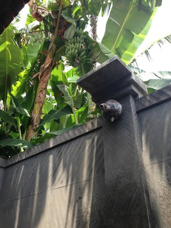 Suka Sari Cottages & Warung: ванная комната